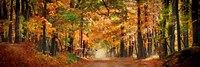 "Horse running across road in fall colors by Panoramic Images - 27"" x 9"""