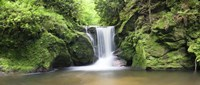 """Water in a forest, Geroldsau Waterfall, Black Forest, Baden-Wurttemberg, Germany by Panoramic Images - 27"""" x 9"""""""