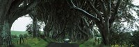 "Trees at the Dark Hedges, Armoy, County Antrim, Northern Ireland by Panoramic Images - 27"" x 9"""