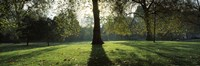 """Trees in a park, St. James's Park, Westminster, London, England by Panoramic Images - 27"""" x 9"""""""