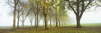 """Trees in a park during fog, Wandsworth Park, Putney, London, England by Panoramic Images - 27"""" x 9"""""""