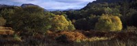 """Trees on a mountain, Glen Carron, Highlands Region, Inverness-Shire, Scotland by Panoramic Images - 27"""" x 9"""""""