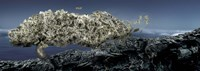 """Money tree by Panoramic Images - 27"""" x 9"""""""