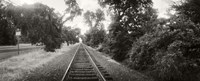 Railroad track, Napa Valley, California, USA Fine Art Print