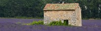 """Stone building in a lavender field, Provence-Alpes-Cote D'Azur, France by Panoramic Images - 27"""" x 9"""""""
