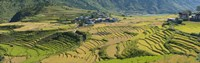 """Rice terraced fields and houses in the mountains, Punakha, Bhutan by Panoramic Images - 27"""" x 9"""""""