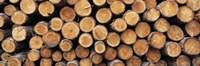 Stack of logs in forest, Burrator Reservoir, Dartmoor, Devon, England Fine Art Print