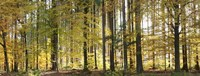 Trees in Autumn Hohenlohe Baden-Wurttemberg Germany