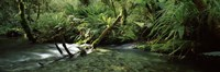 """Divide Creek flowing through a forest, Hollyford River, Fiordland National Park, South Island, New Zealand by Panoramic Images - 27"""" x 9"""""""