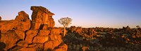"""Quiver tree (Aloe dichotoma) growing in rocks, Devil's Playground, Namibia by Panoramic Images - 27"""" x 9"""""""