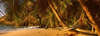"Hammock between two palm trees, Seychelles by Panoramic Images - 27"" x 10"""