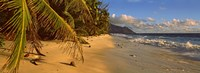 """Palm trees on the edge of a small beach, Seychelles by Panoramic Images - 27"""" x 9"""""""