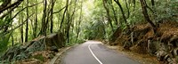 "Road passing through an indigenous forest, Mahe Island, Seychelles by Panoramic Images - 27"" x 9"", FulcrumGallery.com brand"