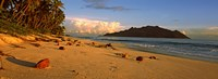 """Coconuts on a palm lined beach on North Island with Silhouette Island in the background, Seychelles by Panoramic Images - 27"""" x 9"""""""