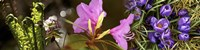 "Details of early spring and crocus flowers by Panoramic Images - 33"" x 8"", FulcrumGallery.com brand"