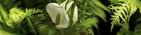 """Close-up of flowers and leaves by Panoramic Images - 33"""" x 8"""""""