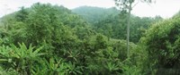 """Vegetation in a forest, Chiang Mai Province, Thailand by Panoramic Images - 27"""" x 9"""""""