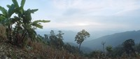 "Trees on a hill, Chiang Mai, Thailand by Panoramic Images - 27"" x 9"" - $28.99"
