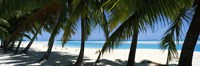 """Palm trees on the beach, Aitutaki, Cook Islands by Panoramic Images - 27"""" x 9"""" - $28.99"""