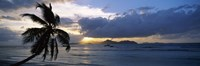 "Silhouette of coconut palm tree at sunset, from Anse Severe Beach, La Digue Island, Seychelles by Panoramic Images - 27"" x 9"""