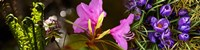 """Close-up of purple and pink flowers by Panoramic Images - 33"""" x 8"""""""