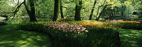 """Tulip flowers and trees in Keukenhof Gardens, Lisse, South Holland, Netherlands by Panoramic Images - 27"""" x 9"""""""