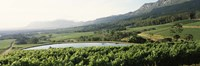 """Vineyard with Constantiaberg mountain range, Constantia, Cape Winelands, Cape Town, Western Cape Province, South Africa by Panoramic Images - 27"""" x 9"""" - $28.99"""