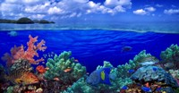 """Underwater view of Yellowbar Angelfish with Tiger Grouper and Oriental Sweetlips (Plectorhinchus Vittatus) by Panoramic Images - 23"""" x 12"""""""