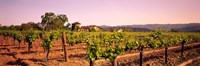 Sattui Winery, Napa Valley, California, USA Fine Art Print