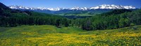 """San Miguel Mountains In Spring, Colorado, USA by Panoramic Images - 36"""" x 12"""""""