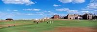 Golf Course, St Andrews, Scotland, United Kingdom Fine Art Print