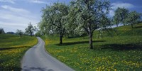 """Spring in Zug, Switzerland by Panoramic Images - 36"""" x 12"""", FulcrumGallery.com brand"""