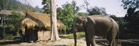 """Elephant standing outside a hut in a village, Chiang Mai, Thailand by Panoramic Images - 36"""" x 12"""""""