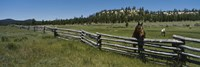 """Two horses in a field, Arizona, USA by Panoramic Images - 36"""" x 12"""""""