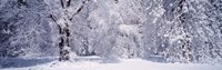 "Snow covered trees in a forest, Yosemite National Park, California, USA by Panoramic Images - 36"" x 12"""