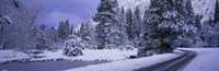 "Winter Road, Yosemite Park, California, USA by Panoramic Images - 36"" x 12"", FulcrumGallery.com brand"