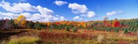 "Autumn Foliage, New York State, USA by Panoramic Images - 36"" x 12"", FulcrumGallery.com brand"