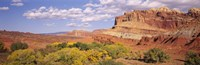 """Orchards in front of sandstone cliffs, Capitol Reef National Park, Utah, USA by Panoramic Images - 36"""" x 12"""", FulcrumGallery.com brand"""