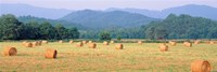 """Hay bales in a field, Murphy, North Carolina, USA by Panoramic Images - 36"""" x 12"""""""