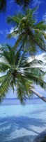 """Maldives Palm Trees by Panoramic Images - 12"""" x 36"""""""