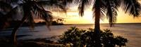 "Kohala Coast, Hawaii, USA by Panoramic Images - 36"" x 12"", FulcrumGallery.com brand"