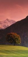 Switzerland, Alps Fine Art Print