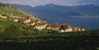 """Village on a hillside, Rivaz, Lavaux, Switzerland by Panoramic Images - 36"""" x 12"""""""