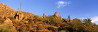 Saguaro Cactus, Sonoran Desert, Arizona, United States Fine Art Print