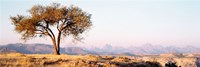 "Tree in a field with a mountain range in the background, Debre Damo, Tigray, Ethiopia by Panoramic Images - 36"" x 12"" - $34.99"