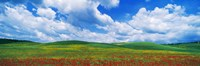 """Open Field, Hill, Clouds, Blue Sky, Tuscany, Italy by Panoramic Images - 36"""" x 12"""", FulcrumGallery.com brand"""