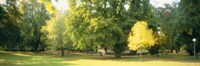 """Trees in a park, Wiesbaden, Rhine River, Germany by Panoramic Images - 36"""" x 12"""""""