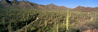 Saguaro National Park, Arizona by Panoramic Images - various sizes