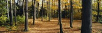 """Chestnut Ridge Park Orchard Park NY USA by Panoramic Images - 36"""" x 12"""""""