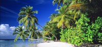 "Palm Beach The Maldives by Panoramic Images - 36"" x 12"" - $34.99"